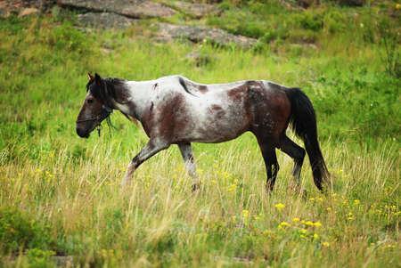 tortured: Old tortured horse