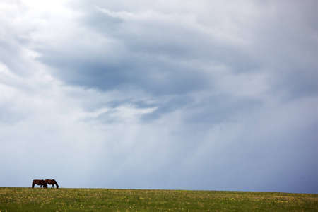 cielo tormenta: Silhouettes of two horses in the meadow and storm sky