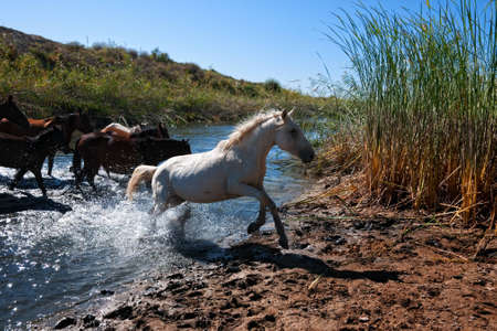 Horses were running along a small river photo