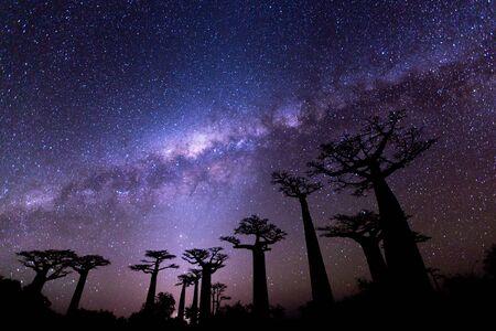 Vía Láctea en la Avenida de los baobabs Foto de archivo