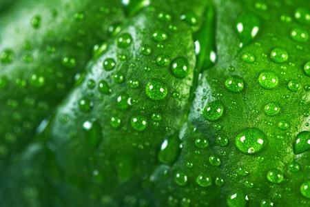 Water drops on the fresh leaf. Macro   photo