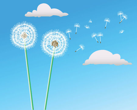 Two dandelions grow on a blue background Vector