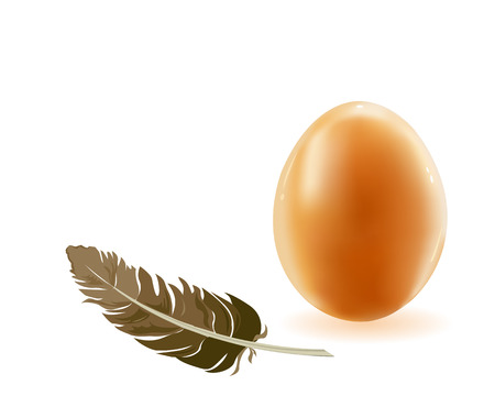 laying egg: Laying egg a bird and birds feather