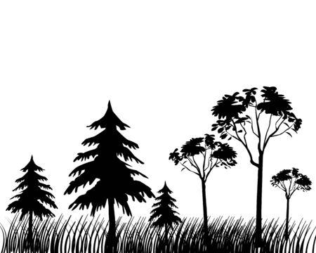 spruce: Siluetas de una madera sobre un fondo blanco  Vectores