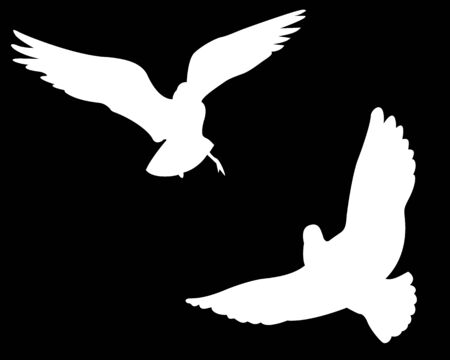 Silhouette of the white pigeon on a black background Stock Vector - 7535632
