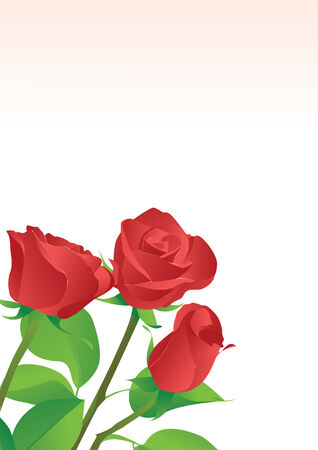 Three red roses on a white background Stock Vector - 7584312