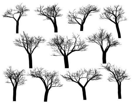 copse: Silhouettes of trees on a white background