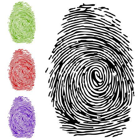 delincuencia: Dactyloscopy. Una impresi�n de un dedo humano