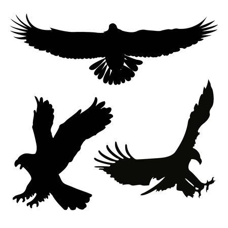silhouette aquila: Silhouette nere a uccelli su uno sfondo bianco