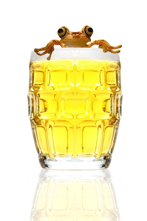 ale: Beer and frog on a white background Stock Photo