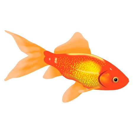 Aquarian a gold fish on a white background Stock Illustratie