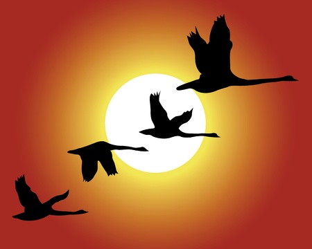 crane bird: Black silhouettes of birds on a background of the sky Illustration
