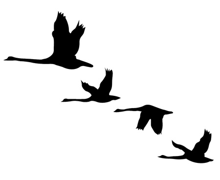 flock: Black silhouettes of birds on a background of the sky Illustration