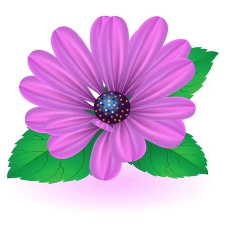 Flower with pink petals on a white background