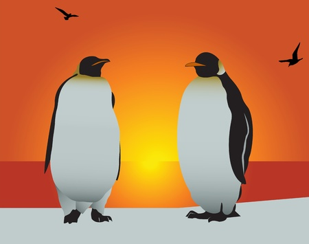 background antarctica: Antarctica. Silhouette of the penguin on a background of the evening sky