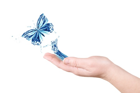 Water and butterfly. Palm on a white background photo