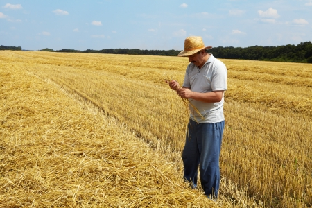 The man stands on a field with wheat. Rich harvest photo