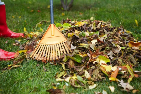 Yellow autumn leaves with rake in backyard Stock Photo