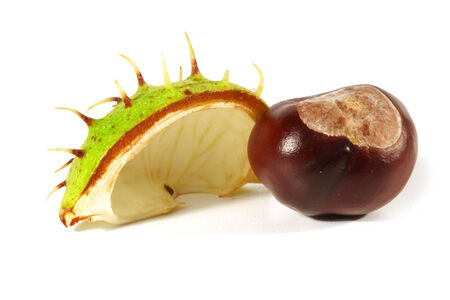 trees with thorns: Horse-chestnut with crust on a white background