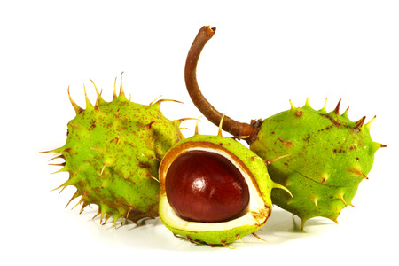 Horse-chestnut with crust on a white background