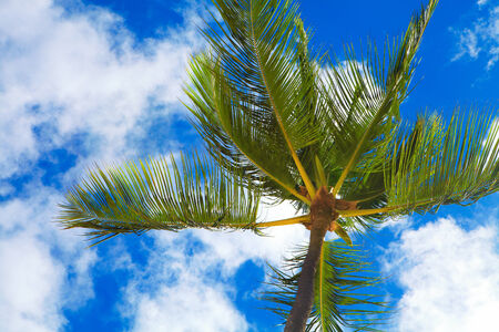 Tropical palm on blue sky background. Exotic vacation. photo