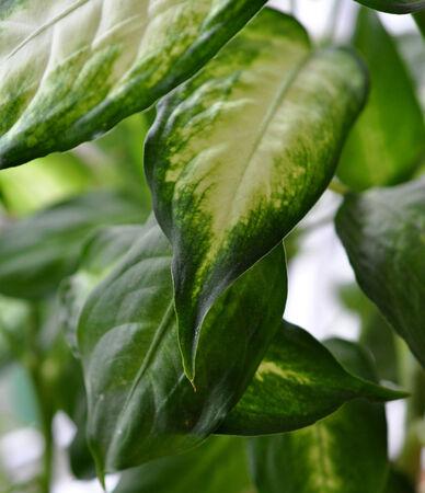 houseplants: leaves of houseplants