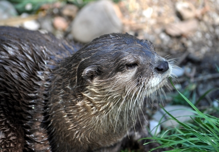 view on river otters