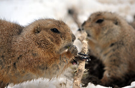whizz: animal - whiz in winter Stock Photo