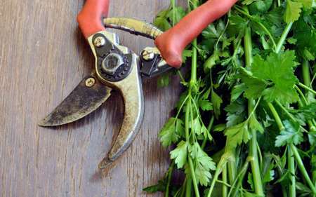 garden shears: hierbas frescas y tijeras de jard�n