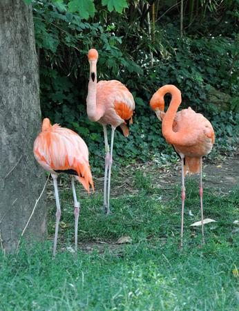 bird feet: bird - flamingo in nature Stock Photo
