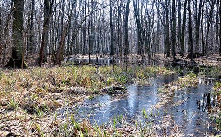 floodplain: Floodplain forests, Czech Republic, Europe