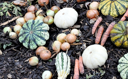 fresh vegetables in garden Editorial