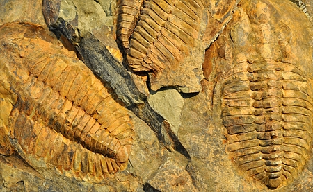 old fossil - trilobite Standard-Bild - 104683815