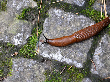 animal,  brown snail Standard-Bild