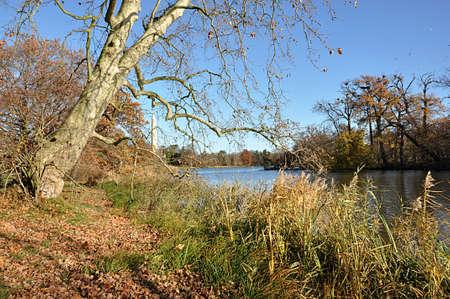 park and autumn