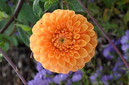 orange flower and garden Standard-Bild