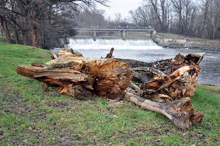 fallen tree and river