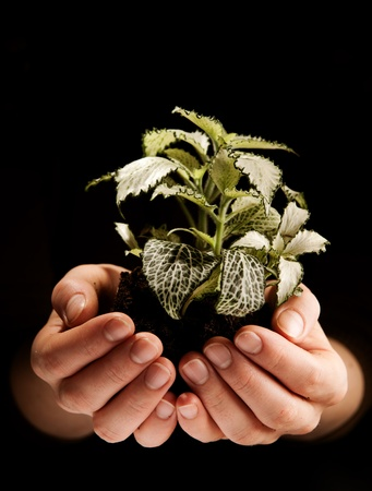 Green plant in female hands on black background photo