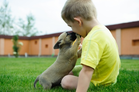 Little boy is kissing his cute dog in green grass Фото со стока