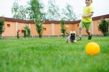 Little boy is racing with his dog to retreive a ball photo