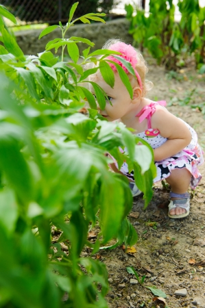 Little girl is hiding over the green bush photo