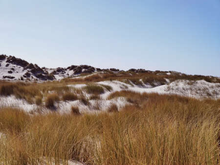 Photo of dunes and white sand beach at German shore of Baltic sea Фото со стока