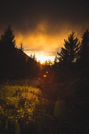penetrate: The suns rays penetrate through the trees Stock Photo