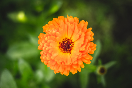 Orange flower on a green background Stock Photo