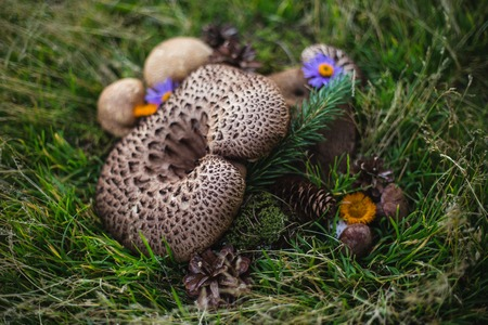 Autumn still-life with mushrooms and flowers on the green grass