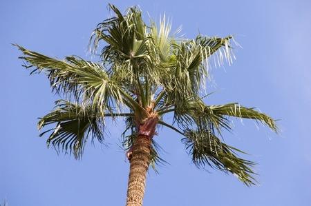 palmtree: Palmtree