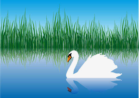 graceful: Abstract vector of a swan in water