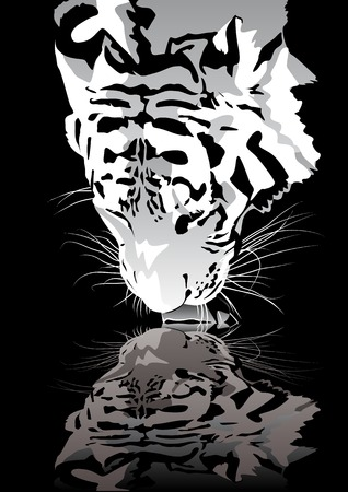 white tigers: Abstract vector illustration of a drinking tiger