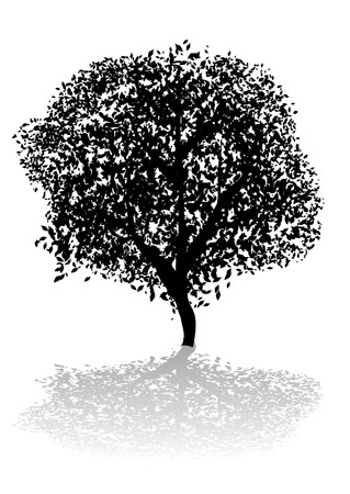 ecosystems: Abstract vector silhouette illustration of a tree and its shadow