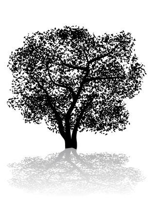 forrest: Abstract vector illustratie silhouet van een boom en zijn schaduw Stock Illustratie